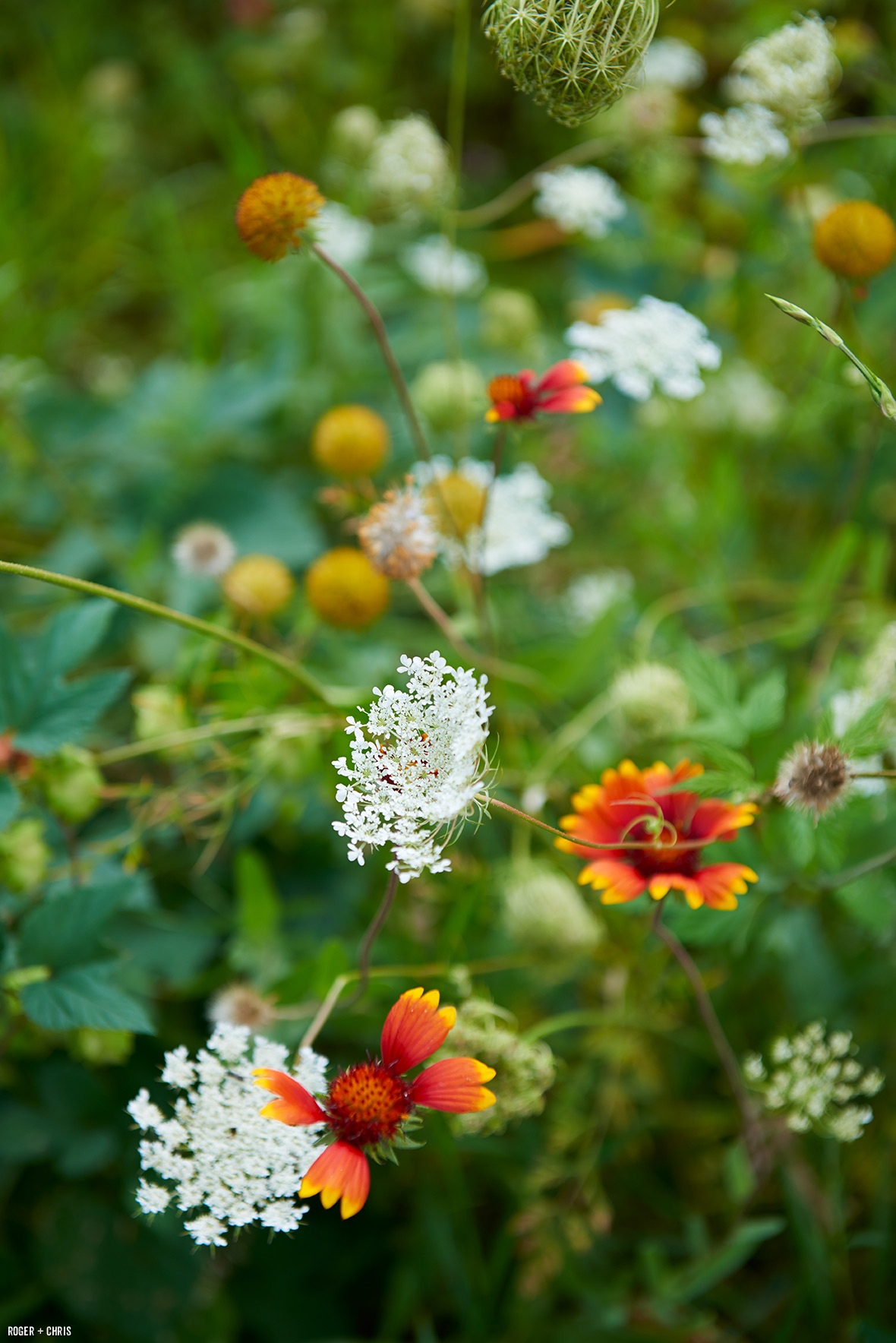 Wildflowers in the garden. Photo by Alec Hemer.
