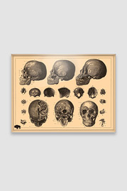 Small Utility Board, Creepy Skulls