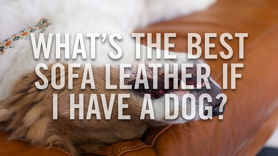 What's the best type of leather for my sofa if I have a dog?